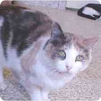 Adopt A Pet :: Nutmeg - Lunenburg, MA