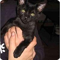Adopt A Pet :: Millhouse - Davis, CA