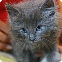 Adopt A Pet :: Wyatt - Canoga Park, CA