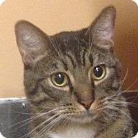 Adopt A Pet :: Carrington - Winchester, CA