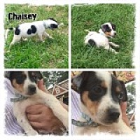 Adopt A Pet :: Chaisey - Prole, IA