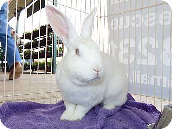 Florida White Mix for adoption in Belton, Texas - Cotton
