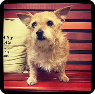 Terrier (Unknown Type, Small) Mix Dog for adoption in Grand Bay, Alabama - Brownie