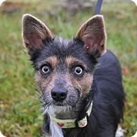 Adopt A Pet :: Rory - Vacaville, CA