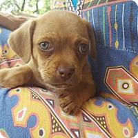 Adopt A Pet :: Jupiter - Austin, TX