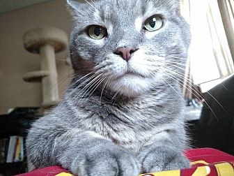 Calico Cat for adoption in Minneapolis, Minnesota - Smokey