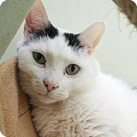 Adopt A Pet :: Ralph - Norfolk, VA