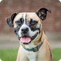 Adopt A Pet :: Blitz - Garner, NC