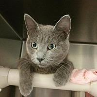 Adopt A Pet :: Thunder - Chippewa Falls, WI