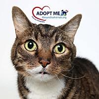 Adopt A Pet :: Pohaku - Alexandria, VA