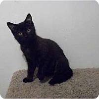 Adopt A Pet :: Joy - Modesto, CA
