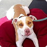 Adopt A Pet :: JUNIOR - Ojai, CA