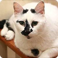 Adopt A Pet :: Spot - San Antonio, TX