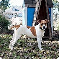 Adopt A Pet :: Adella - Gadsden, AL