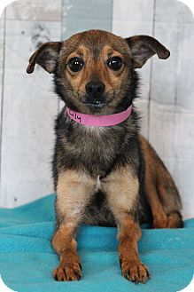 Chihuahua Mix Dog for adoption in Waldorf, Maryland - Lily