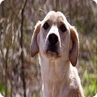 Adopt A Pet :: Katie pending adoption - East Hartford, CT