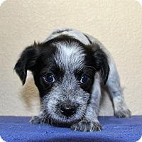 Adopt A Pet :: Calla - Alamogordo, NM