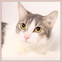 Adopt A Pet :: Keiper - Glendale, AZ