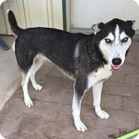 Adopt A Pet :: Skye - McKinney, TX