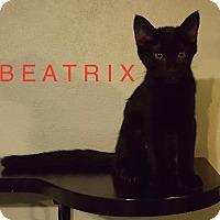 Adopt A Pet :: BEATRIX - detroit, MI