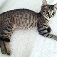 Adopt A Pet :: Irma Jean17 - Youngsville, NC