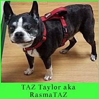 Adopt A Pet :: Taz Taylor aka RasmaTAZ  FL - Various Cities in the entire Southeast, TN