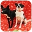 Photo 4 - Schipperke Mix Dog for adoption in Sugar Land, Texas - Bonnie