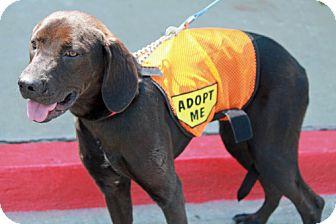 Labrador Retriever Mix Dog for adoption in Marietta, Georgia - Avery