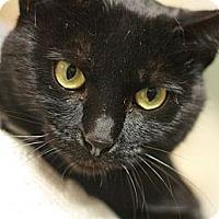 Adopt A Pet :: Gabriella - Canoga Park, CA