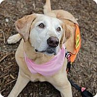Adopt A Pet :: Abby Senior - Cumming, GA