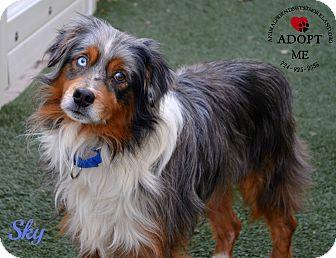 Anatolian Shepherd Mix Dog for adoption in Youngwood, Pennsylvania - Sky