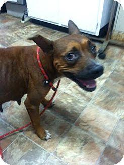 Shepherd (Unknown Type)/Rhodesian Ridgeback Mix Dog for adoption in Darlington, South Carolina - Dixie