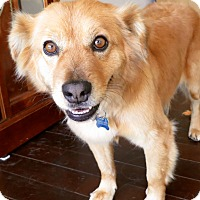 Adopt A Pet :: Roxy - Los Angeles, CA
