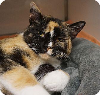 Calico Cat for adoption in Farmington, New Mexico - Gaia