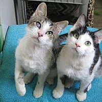 Adopt A Pet :: Chaz & Chevy - Bloomsburg, PA