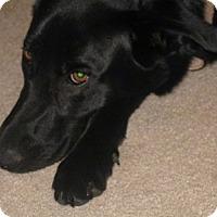 Adopt A Pet :: Ossi (in adoption process) - El Cajon, CA