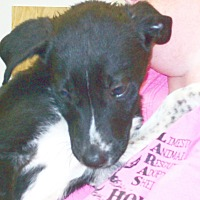 Adopt A Pet :: Minnie - Mexia, TX
