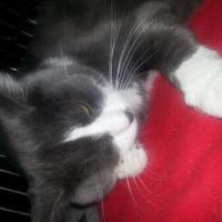 Adopt A Pet :: skeeter - Robinson, IL