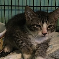 Adopt A Pet :: Macho - East Brunswick, NJ