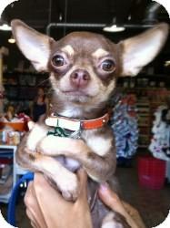 Chihuahua Mix Dog for adoption in Encino, California - Princessa