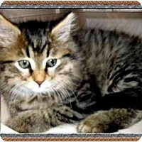 Adopt A Pet :: Micah - Jacksonville, FL