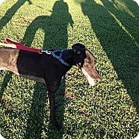 Adopt A Pet :: Fidel - Vidor, TX