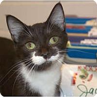 Adopt A Pet :: Geraldine - New Port Richey, FL