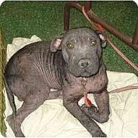 Adopt A Pet :: Little Foot - Fowler, CA