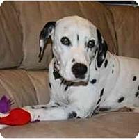 Adopt A Pet :: Brady - League City, TX