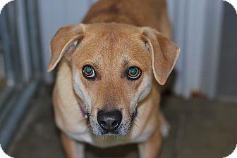 Labrador Retriever Mix Dog for adoption in Buffalo, Wyoming - Emily