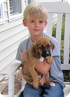 Boxer Mix Puppy for adoption in Port St. Joe, Florida - Harmony
