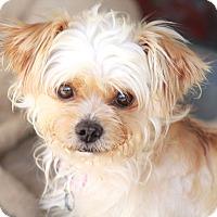 Adopt A Pet :: Raffles - Norwalk, CT