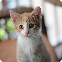 Adopt A Pet :: Rhythm (The Musicians) - Richmond, VA