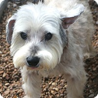 Adopt A Pet :: Acorn - MEET ME - Norwalk, CT